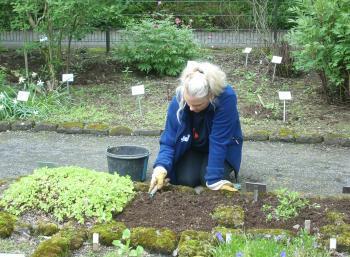 Botanic Garden in Reykjavík (1:10)
