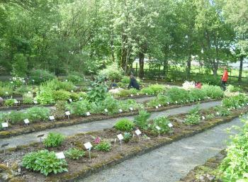 Botanic Garden in Reykjavík (2:10)