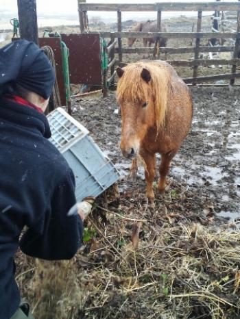 Fun, farm & Animals in the South (2:2)