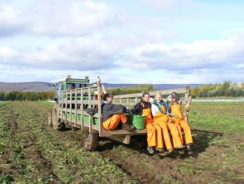 Organic farming in Iceland (2)