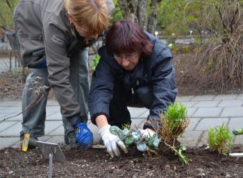 Growing Gardens in Reykjavík (1:2)