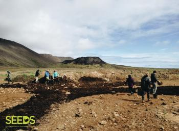 Revegetation in the South-west of  Iceland (1/3)