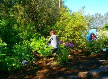 Growing Gardens in Reykjavík (2:2)