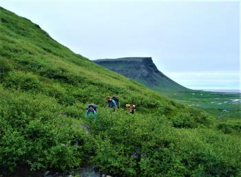 Trees and Walking in the Westfjords