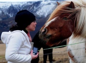 Working & Horseback riding in the East fjords
